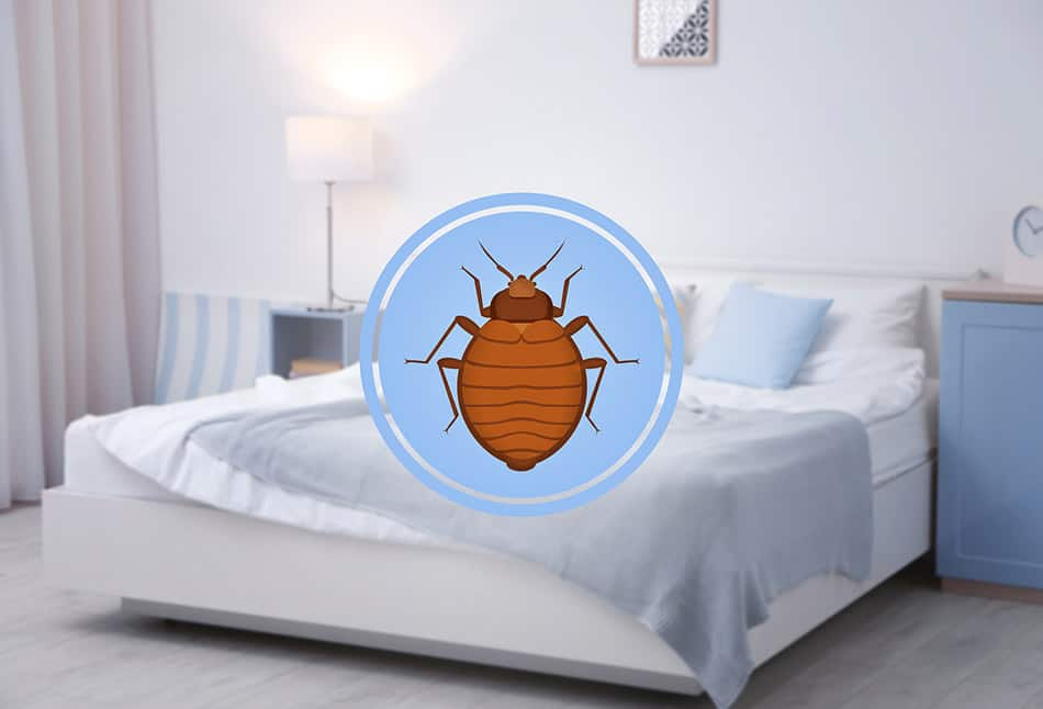 Bed bugs in hotel bed