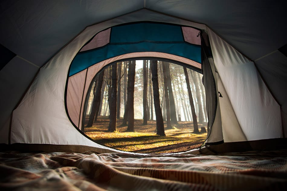Open tent in pine forest