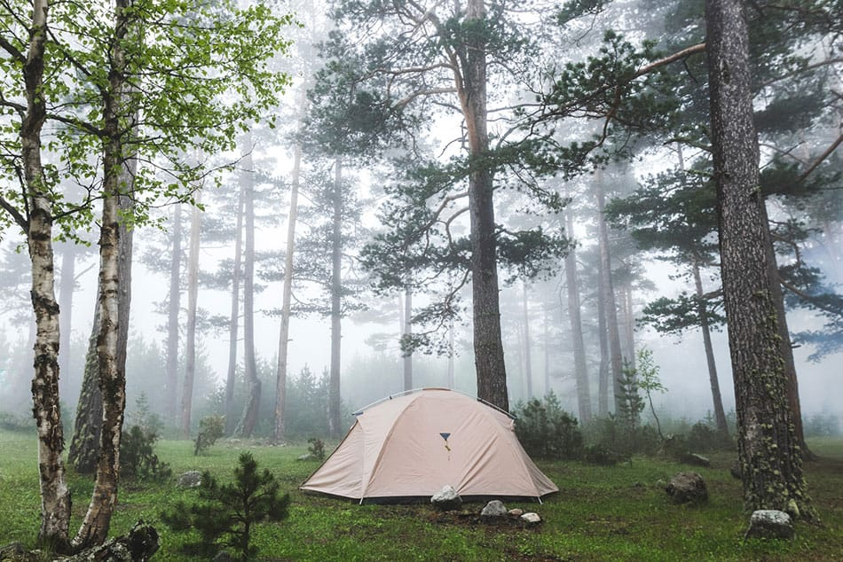 Tent set up in the woods