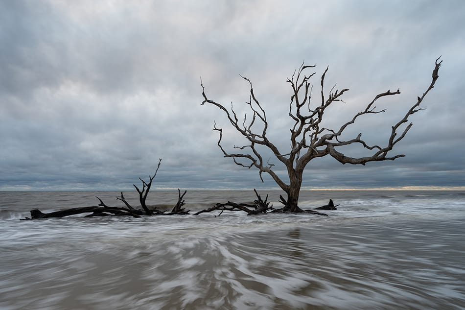 Gnarled tree in the water at Driftwood Beach Jekyll Island